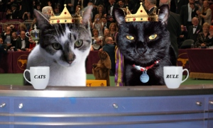 We did a lot of photoshopping of our cats.